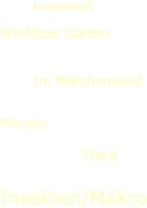 Landschaft  Wörlitzer Gärten   Im Märchenwald   Pflanzen  Tiere    Insekten/Makro